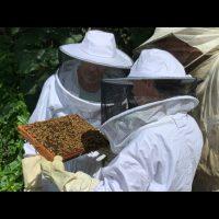 Journée découverte apiculture week-end du 11/08/19