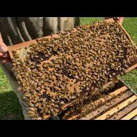 Journée découverte apiculture